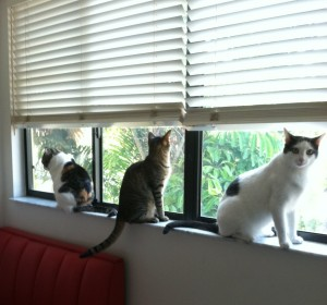 My Three Cats